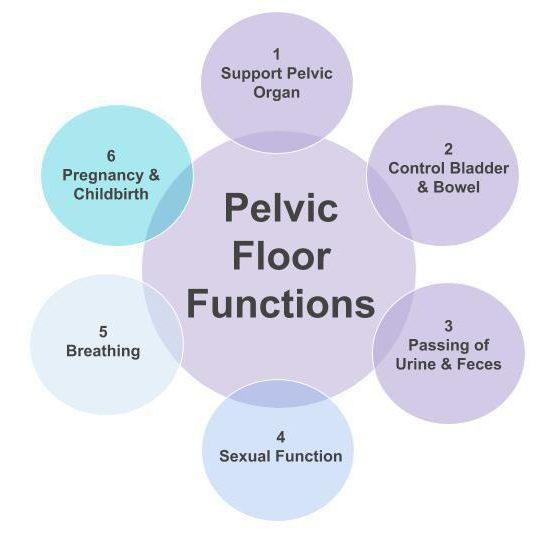 The Pelvic Floor   Northwest Wellness Group